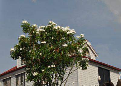 bloemenpracht tuin van edesse