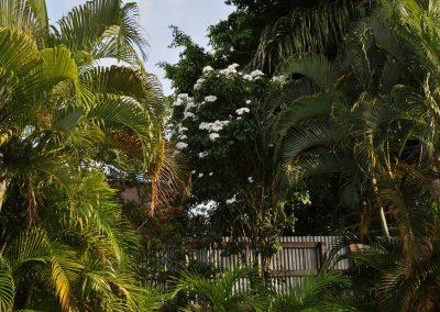 tropische tuin bij edesse